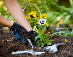 essay like gardening