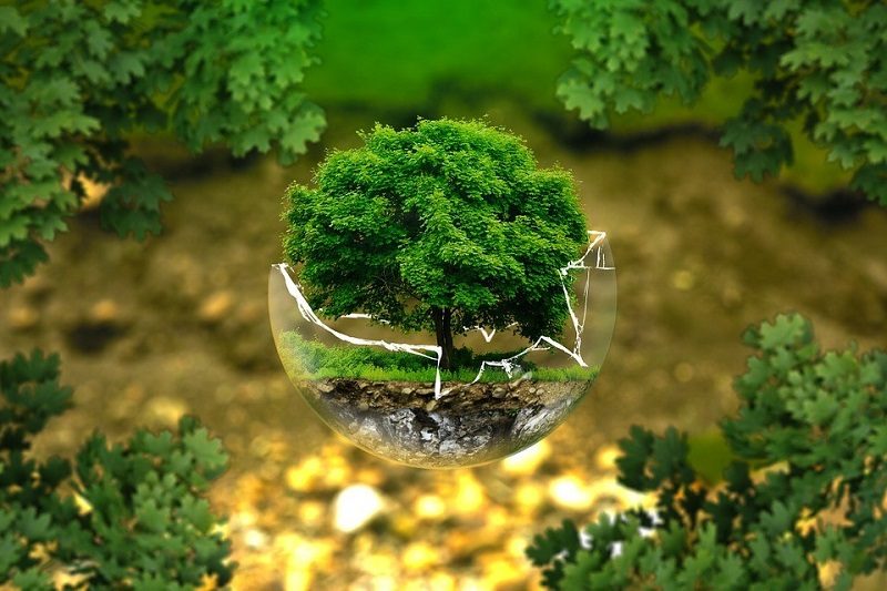 tree in glass ball